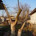 Формировка деревьев, кустов, продажа растений адаптированных, расчистка, участка уборка